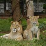 safari_preview